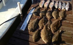 flounder1